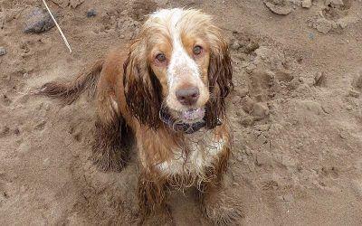 A sad farewell to Inchinnan dog Penny!