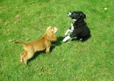 Penny meets up with puppy class buddy, Cooper!
