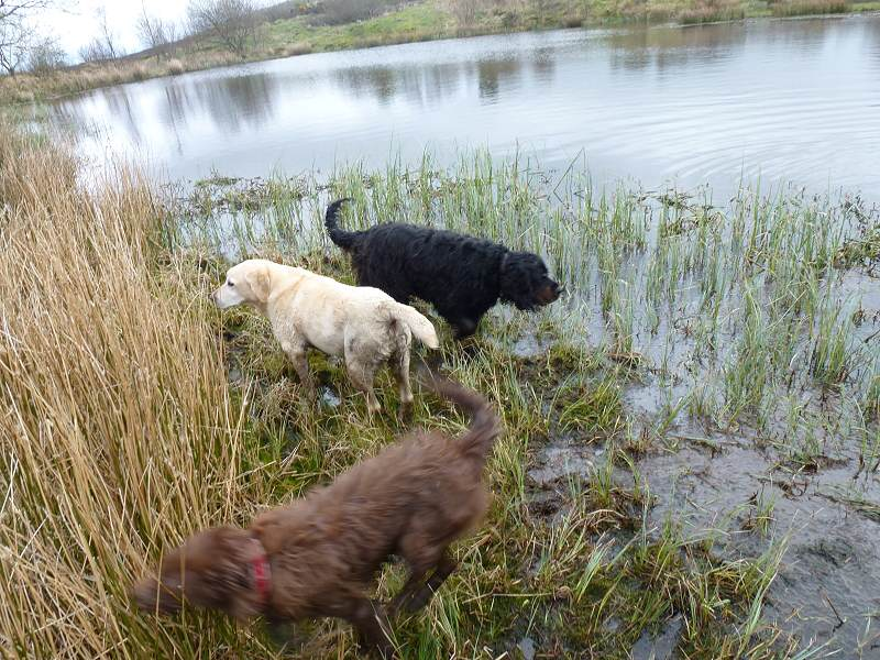 It's Langbank day with Ruby, Bonnie, Ami and Chewie!