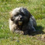 Ruffles sits on the grass!
