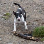 Wilfred wants me to throw his stick!