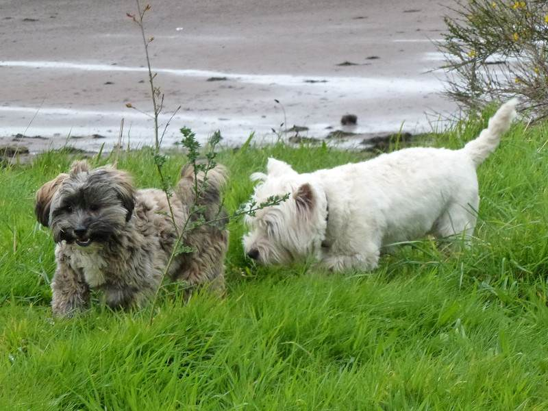A windy walk with Mack and Ruffles