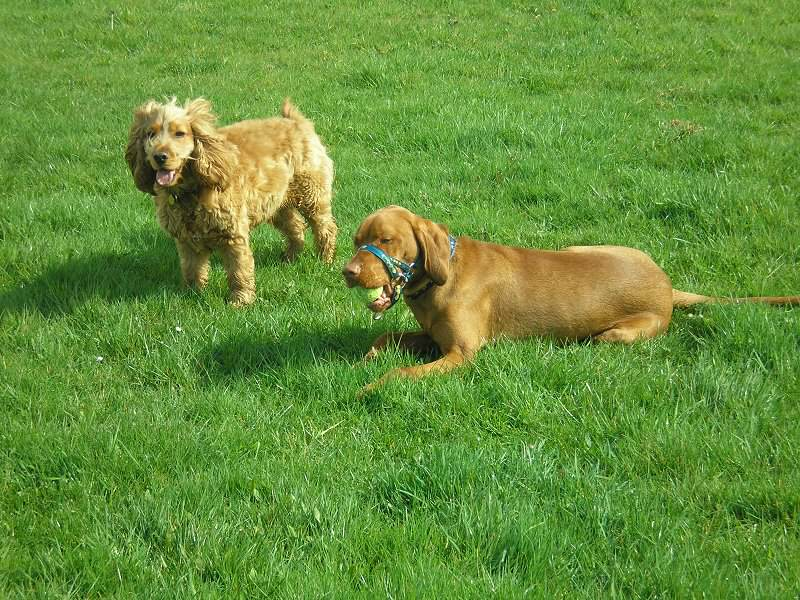 Archie often went walkies with Jay