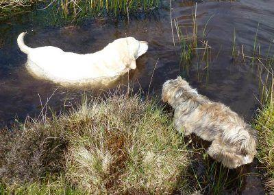 Bonnie cools off, Ruffles is unsure!