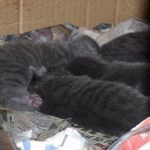 kittens sleeping in their den