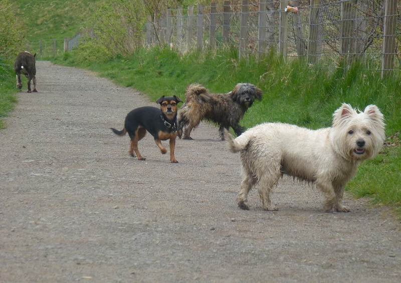 The cold winds and rain don't stop dogs having fun!