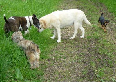 A pack walk in Langbank