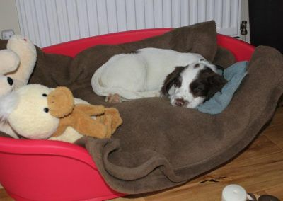 Nevis on his first day home