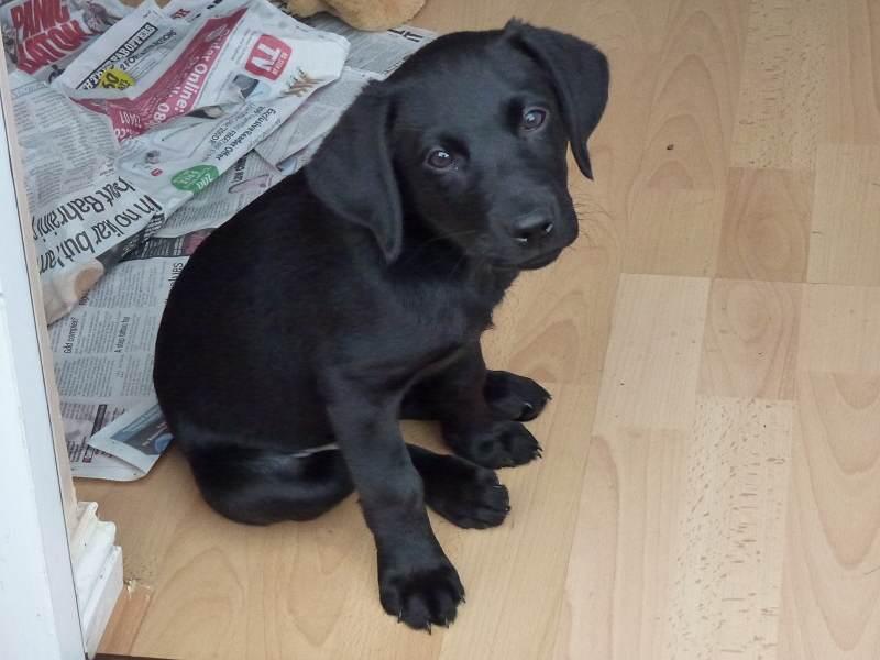 Meet Beau!