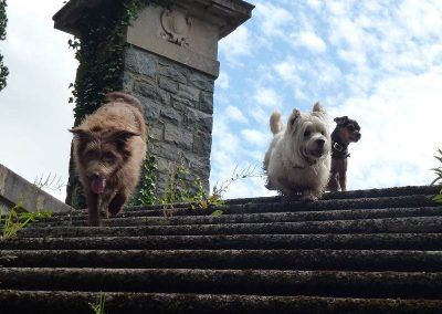 Ruby, Mack and Chilli at the top of some stairs we came across!