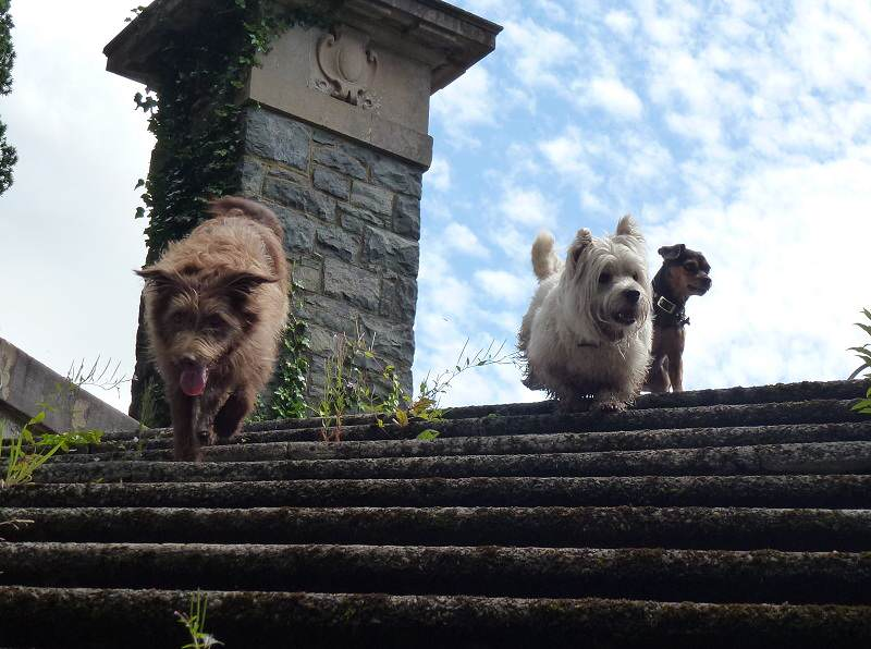 Dogs at the top of stairs