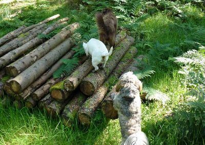 A log pile we found!