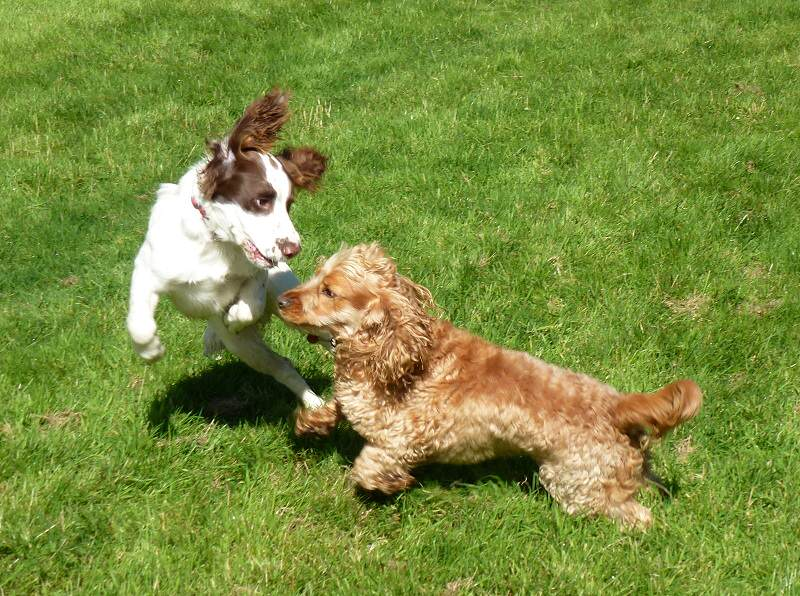 Nevis playing with Jay!