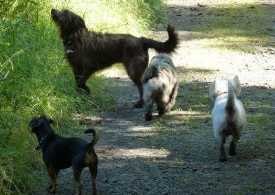 The pack on the Port Glasgow trail!