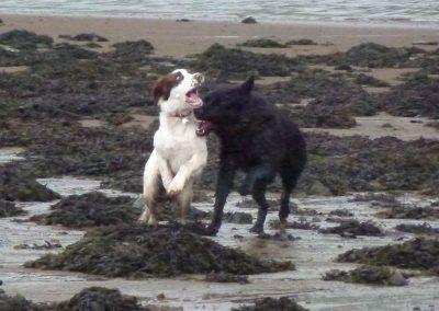 Nevis and Skye having fun!