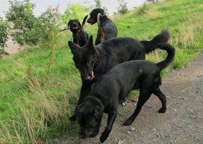 Skye loves her new friends!