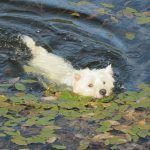 Mack having a wee paddle!