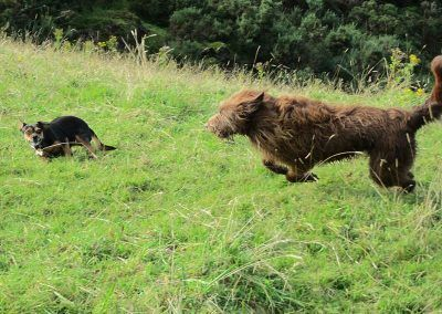 Ruby chases Chilli!