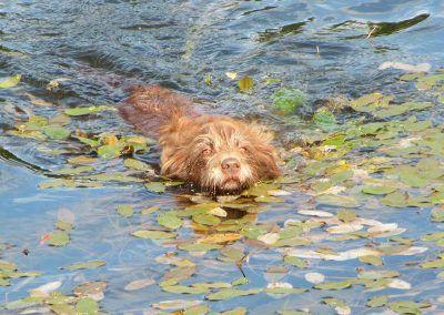Ruby swimming!