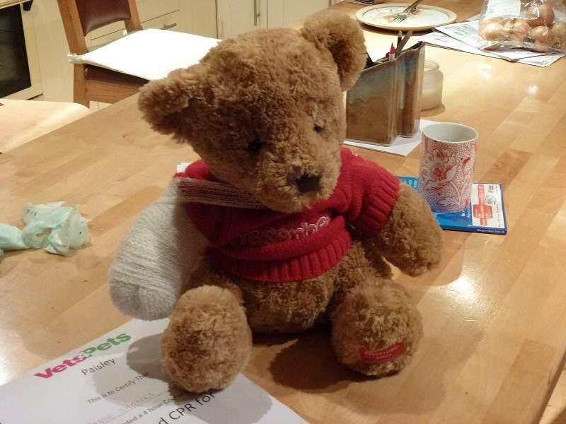 bandaged bear!