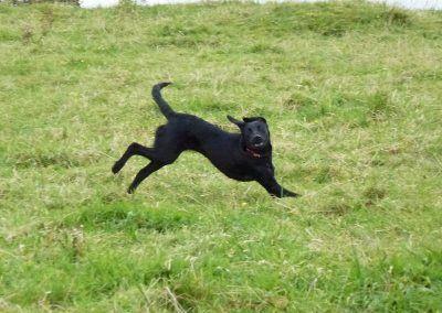 Puppy Beau!