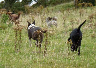 Running to the loch!