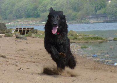Renfrewshire dog walkers