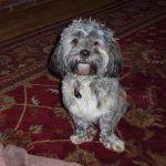 Pet sitting Erskine dog Ruffles!