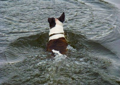 Wilfred loves to swim!