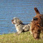 Dogs in sun
