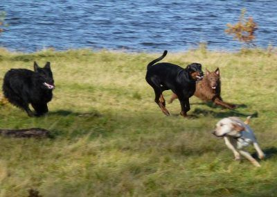 The dogs chase after Hugo!