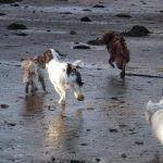 Dog walking in Erskine