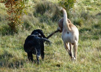 Benny and Hugo share a stick!