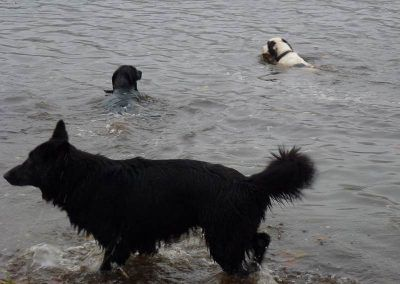 Benny follows Jack into the water!