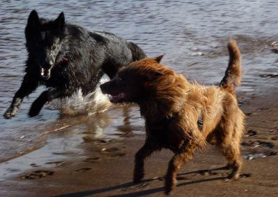 Skye and Ruby love to run together!