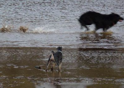 Blue watches Skye fly by!