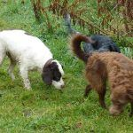 dogs sniffing!