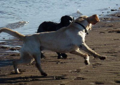 Working dogs playing!
