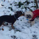 Chilli greets Broxi