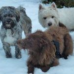 Dogs in snow!
