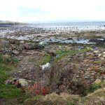 The Parklea coastline