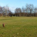 ruby running on parklea playing fields