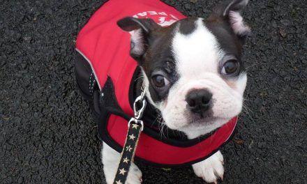 Puppy walks with Buddy!