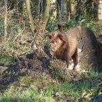 dog digging in mound
