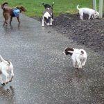 dog walking at parklea in the rain