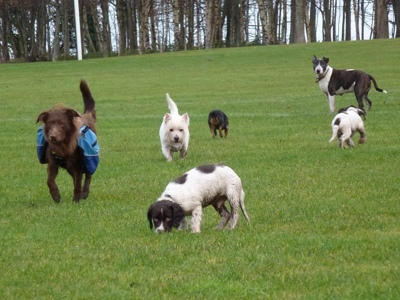 Glasgow Dogs Go Walking