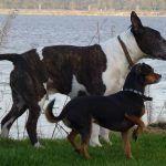 dogs walking alongside river clyde