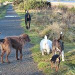dogs walking on new years day