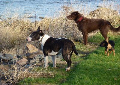 Wilfred and Ruby look out onto the Clyde and towards the Greenock docks!