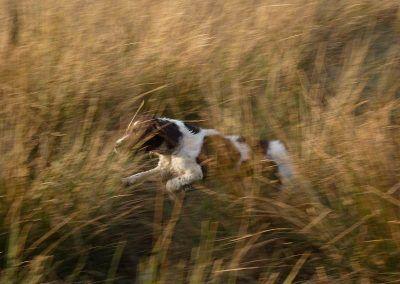 Daisy on the run!